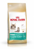 ROYAL CANIN Gatos Kitten Maine Coon 36